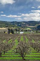 Orchards in spring bloom, Hood River Valley Oregon