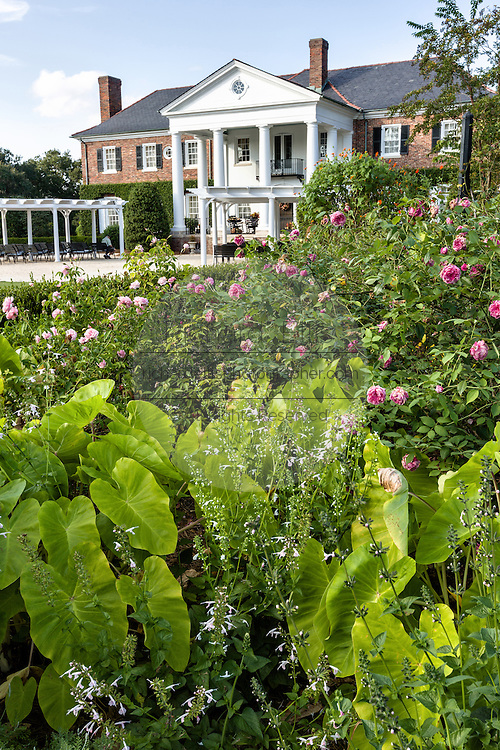 The Colonial Revival plantation house surrounded by English gardens at Boone Hall Plantation in Mt Pleasant, South Carolina.