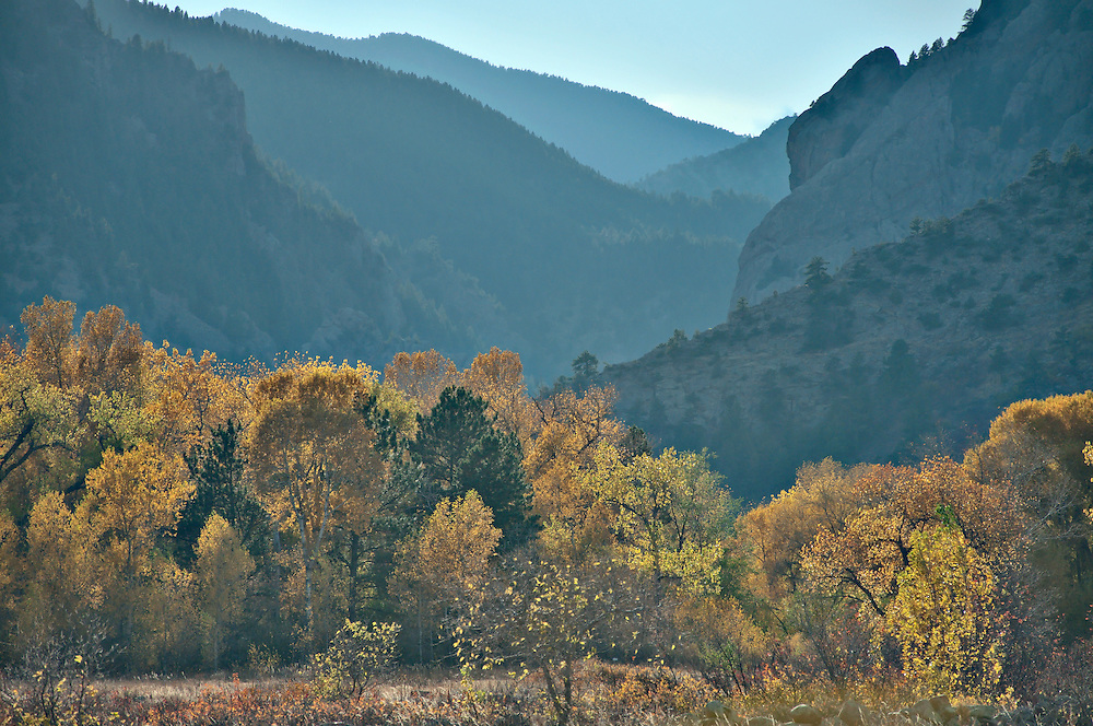 An autumn valley filled with aspen trees seen from the Mesa Trail in Boulder, Colorado. Photo by William Byrne Drumm.