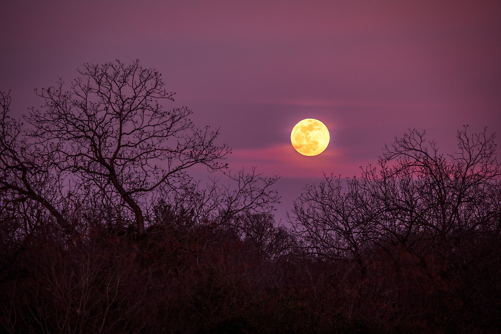 Full moonrise the evening of the January 2019 total lunar eclipse, Austin, Texas