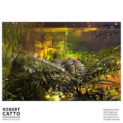 River Queen Premiere, Wanganui, New Zealand.