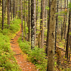 A trail around Ammonoosuc Lake in New Hampshire's White Mountain National Forest.