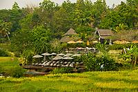 Rice paddies and swimming pool, Four Seasons Resort Chiang Mai, Mae Rim district, near Chiang Mai, Northern Thailand