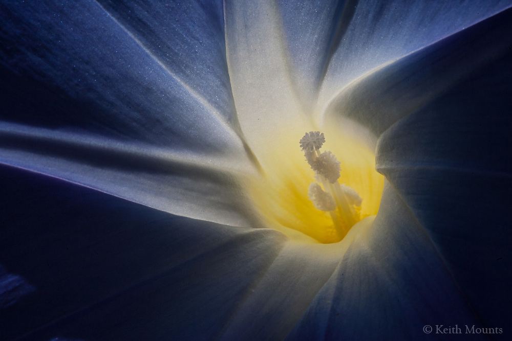 Why is a flower so splendid? Because a Creator made it so, that it may be joyfully experienced.