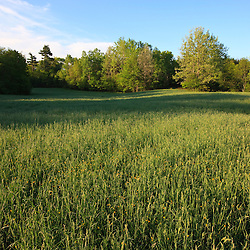 A hay field at Windrush Farm in North Andover and Boxford, Massachusetts.