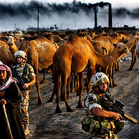 British troops stop a camel train in Northern Iraq as they patrol the area.Picture David Cheskin.