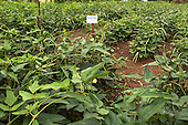 Harvesting Nutrition Contest