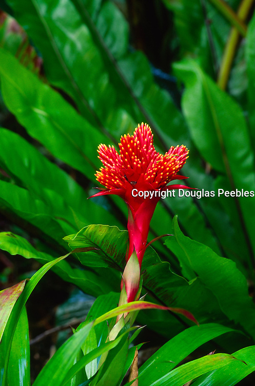 Bromeliad flower<br />