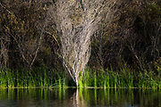 Dead tree. The Ballona Wetlands is a protected area near Marina Del Rey and Playa Del Rey, and is one of the last significant wetlands area in the Los Angeles basin. Development and the  concreting over of the Ballona Creek in the 1930's for flood control purposes, reduced the 2100 acre wetlands to its present size of about 700 acres. Los Angeles, California, USA
