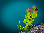 dolomites mountains, Italy leaves in front of the green water of a glacier lake