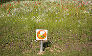 Wildflower meadow planted for bees in Abersychan, Torfaen, Monmouthshire, South Wales, UK