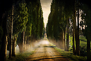 The morning fog over a road surrounded by Cypress Trees in Italy