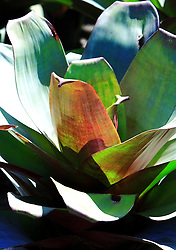 Flor - Bromelia. FOTO: Jefferson Bernardes/Preview.com
