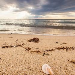 A sea shell under storm clouds at Duck Harbor Beach in Wellfleet, Massachusetts. Cape Cod.