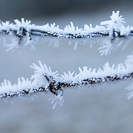 Frozen barbed wire in winter