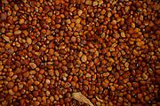 Cabrobo_PE, Brasil.<br /> <br /> Detalhe de feijao em Cabrobo, Pernambuco.<br /> <br /> Beans detail in Cabrobo, Pernambuco.<br /> <br /> Foto: LEO DRUMOND / NITRO