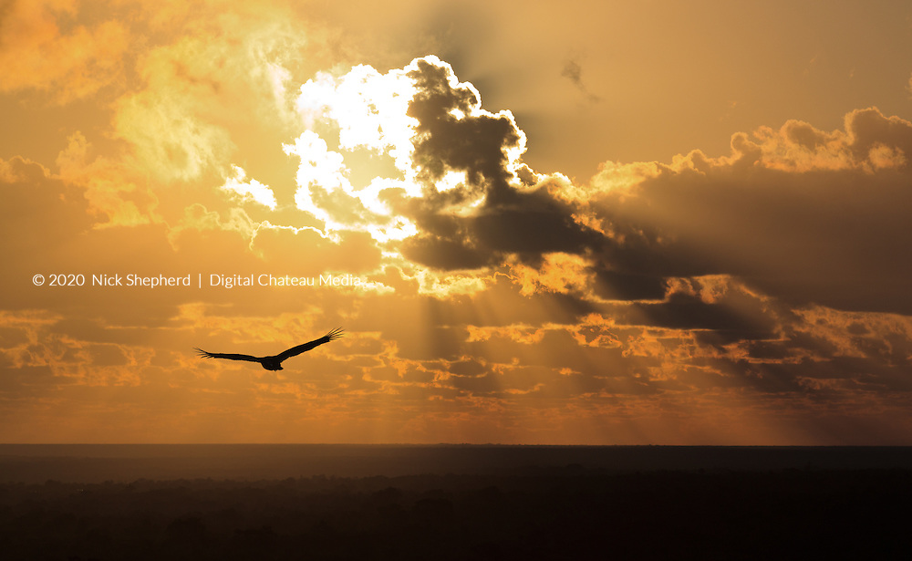 The sun bursting through the early morning clouds as a vulture flies past in the Yucatan. Mexico.