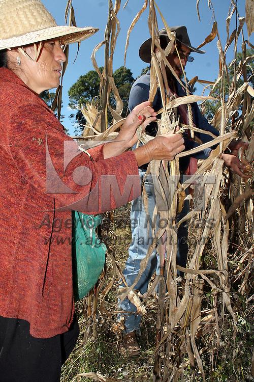 Villa de Allende, México.- Hombres y mujeres a muy temprana hora comienzan a cosechar el maíz de los campos. Agencia MVT / José Hernández