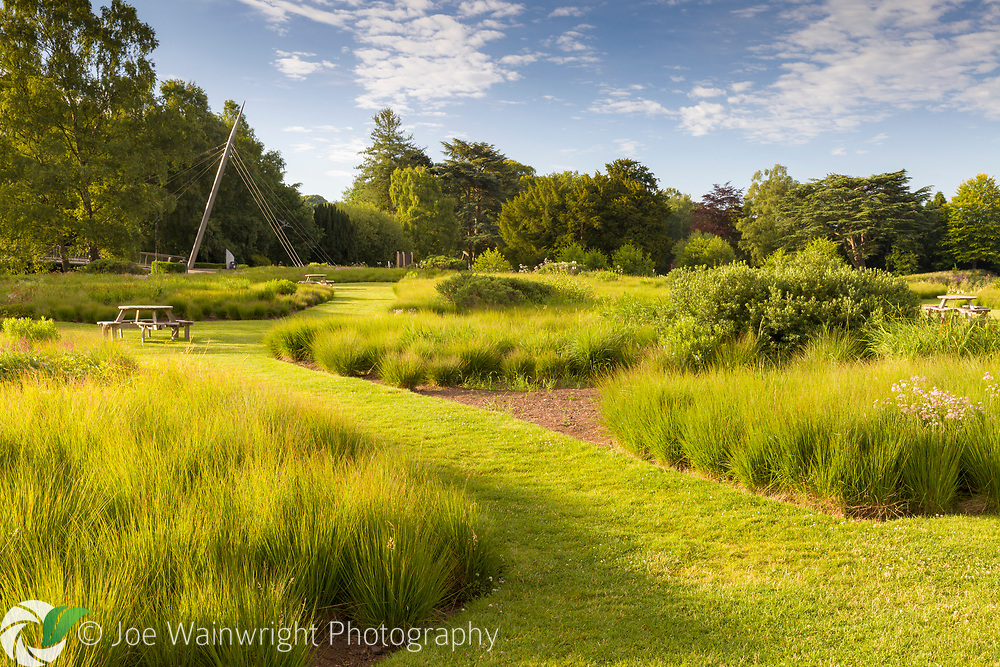 Two varieties of Molinia caerulea dominate the planting of the Rivers of Grass area of Trentham Gardens, Staffordshire. Designed by Piet Oudolf.