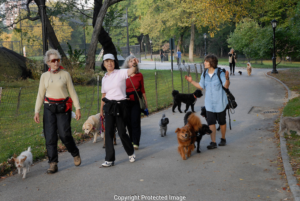 Women walking dags in Central Park New York City