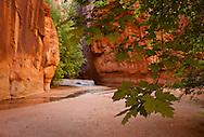 Buckskin Gulch near confluence with Paria Canyon, AZ