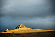 Paramo or high Andean tundra eco system<br /> Chimborazo Forest Reserve<br /> Andes<br /> ECUADOR, South America
