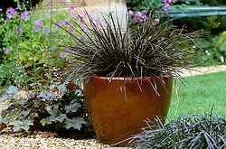 Uncinia rubra in a ceramic container with Heuchera and Ophiopogon planted in the surrounding gravel. Design: Anthony Goff