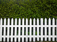 white picket fence and laurel hedge