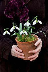 Sarah holding pot of snowdrops - Galanthus 'John Gray'