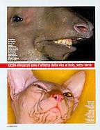 Publication: FOCUS (Italy) No. 200, June 2009;.Photography by Heidi & Hans-Jürgen Koch/animal-affairs.com