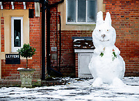 Snow Bunny at the  Town Council office <br /> Garth Park  Bicester Oxfordshire photo by Brian Jordan 24th jan 2021