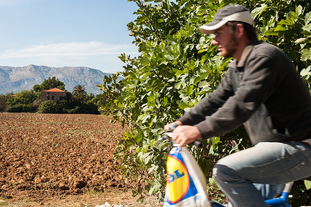 """A farmer cycles by a field in Kampos, Chios. <br /> Kampos of Chios  is one of the most distinctive areas of the island. It is 6 Km south of Chios Town and is widely known for the impressive mansions with their citrus fruits gardens. The area is protected by the Greek Ministry for Culture, as a historic site and traditional settlement. The high walls made of the local reddish stone protect the gardens of citrus fruits from extreme weather conditions.  The Genoese and local aristocracy of Chios started building their mansions in the area in the 14th century. The name """"Kampos"""" (""""Campus"""" in Latin) is found in travellers' accounts since 1673.  The Genoese created the extensive citrus gardens in Kampos in the 13th century."""
