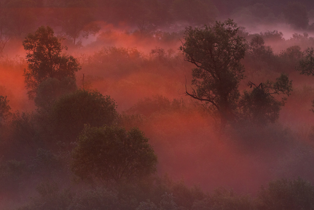 Willows | Dviete Floodplain Nature Park. Forests and trees in Latvia Ⓒ Davis Ulands | davisulands.com