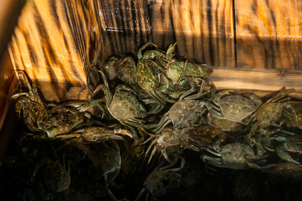 """VENICE, ITALY - APRIL 2018. <br /> Crabs have been placed on a """"viero"""", wooden box where the the fishermen keep the crabs that will become moeca in few hours. Moeca in the Venetian dialect means soft. So the crabs are ready when they lose their shell. This happens just twice a year, in aprill-may and in september, and the only place in Italy where they are fished is in the Venetian lagoon."""