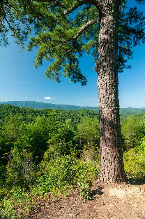 View from the Cades Cove Mountain Overlook on the Foothills Parkway in Great Smoky Mountains National Park in Wears Valley, Tennessee on Wednesday, August 12, 2020. Copyright 2020 Jason Barnette