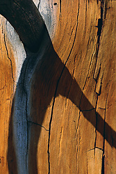 Shadow from branch across the weathered surface of an old cedar tree