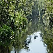 River scene in Puting National Park, Borneo.