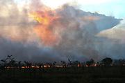 Africa, Tanzania, Serengeti National Park Wild bush fire