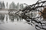 Water ripples in rings over the reflections of trees and fallen branches at dawn on the Spokane River near Spokane, Washington.