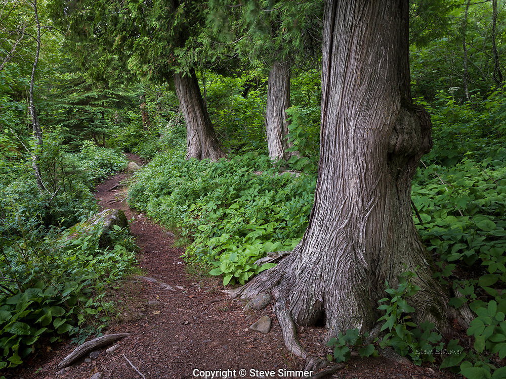 A trail on the shore of Lake Superior in Cascade River State Park. The old cedars have seen some things in their time!