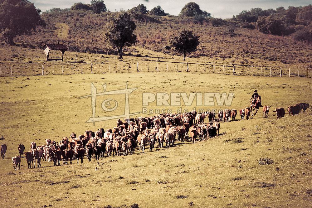 Gaúcho conduz seu rebanho bovino após marcação do gado. Foto: Jefferson Bernardes/Preview.com