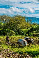 Farming, Amhara region, Ethiopia.