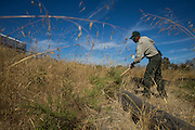 Corey Johnson, SCCP Park Maintenance employee of 30 years, cleans weeds from a parking lot in preparation of Santa Clara County Park's Day on the Bay event at Don Edwards San Francisco Bay National Wildlife Refuge in Alviso, California, on October 8, 2016. Seven SCCP employees and about 30 Santa Clara County inmates put in more than 200 man hours to get the Refuge event-ready. (Stan Olszewski/SOSKIphoto)