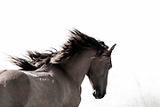 """""""Keep the faith, don't lose your perseverance and always trust your gut extinct"""" ~ Paula Abdul<br /> <br /> <br /> Tracie Spence's fine art photography series of The Spanish Wild Mustangs."""