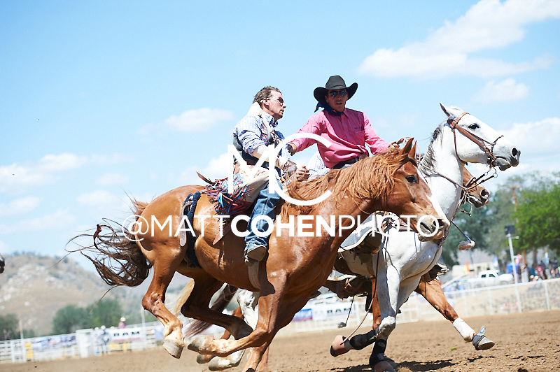 Pickup man Bronc Boehnlein of Brawley, CA helps bareback rider Teddy Athan of Livermore, CA off of Lampe Dodge at the Woodlake Lions Rodeo.<br /> <br /> <br /> UNEDITED LOW-RES PREVIEW<br /> <br /> <br /> File shown may be an unedited low resolution version used as a proof only. All prints are 100% guaranteed for quality. Sizes 8x10+ come with a version for personal social media. I am currently not selling downloads for commercial/brand use.