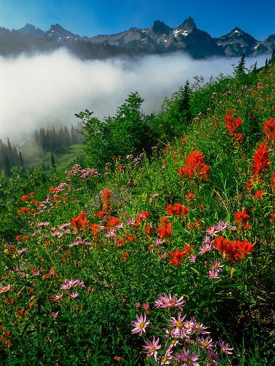 Indian paintbrush and alpine daisies, Tatoosh Range in background, Mount Rainier National Park, Washington, USA