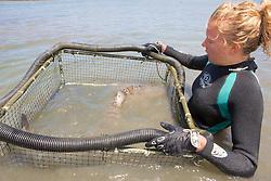 Stephanie Crawford Transporting Leopard Shark