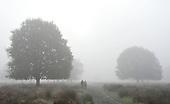 2010_11_16_Fog_Richmond_SSI