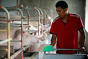 "A hired help feed sows who recently gave birth to a new litter at the Grand Canal Pig Farm in Jiaxing, Zhejiang Province, China on 04 August, 2011.  Pork is by far the most popular meat eaten in China, with its value deeply ingrained in the mind of the Chinese people. The importance of pork in the Chinese diet and the role of prices in affecting social stability are demonstrated by the establishment in 2007 by the central government of a ""strategic pork reserve"", the only one of its kind in the world."