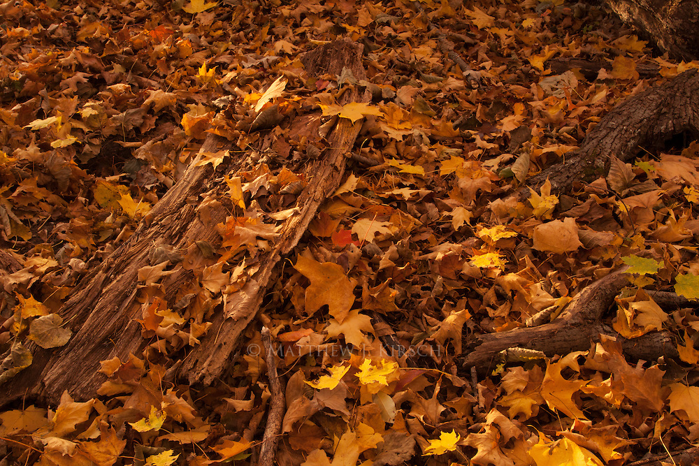 Warm colored leaves with the combination of rustic wood will warm any soul.